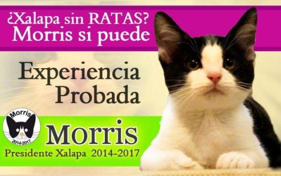 cat for mayor 2.jpg